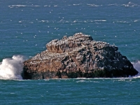 27. Gannets on the cliff