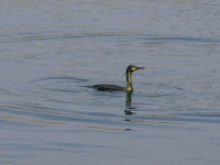 10. Shag in water
