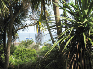 Palms_in_Alderney_sm