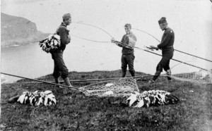 Puffin hunting in 1890's