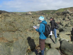Mel and Aurelie identify what species are present and discuss how to describe them during an intertidal study
