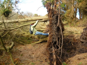 Cristina shows just how shallow the roots are for such a large tree