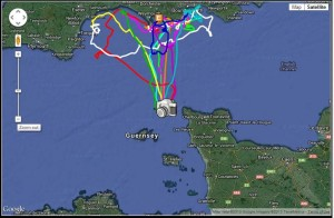 Each colour shows a different foraging trip one gannet made from Les Etacs to southern England