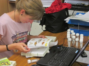 Cristina is identifying the insect samples