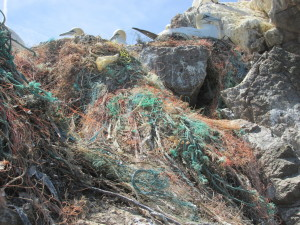 Fishing net used by gannets in nests