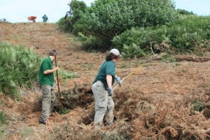 National Trust for Jersey clearing bracken