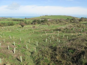 The Alderney Community Woodland will grow and prosper in the coming decades