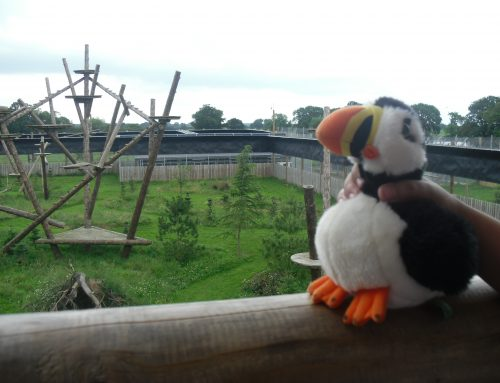 The Travelling Puffins!
