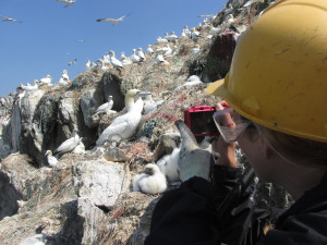 Vicky taking a moment to photograph the gannets