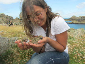 At just a few days old the common tern chicks are already very lively