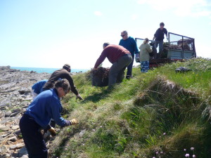 The conservation volunteers remove the invasive Hottentot Fig