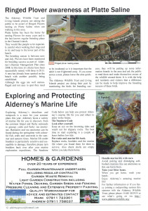 An article in our local press publication showing the awareness of the ringed plovers (you can also see an article outlining appropriate rockpooling behaviour that we do)