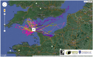 gannets, map, tag, tracking, seabirds, alderney, channel islands
